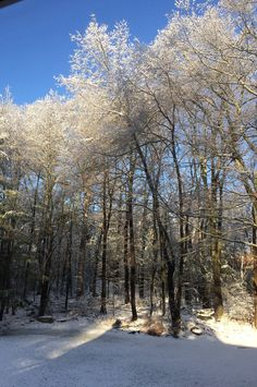 Ice and trees.