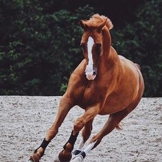 Pinterest ➳ ercequestrian #HorseSadles