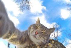Manny-kissa on selfieiden kuningas Omistajansa GoPro-kameraan viehtynyt Manny-kissa on kerännyt lähes 170 000 seuraajaa Instagramissa.  http://kotimikro.fi/kuva/kuvat/manny-kissa-on-selfieiden-kuningas