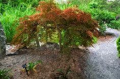 I uploaded new artwork to fineartamerica.com! - 'Botanical Garden' - http://fineartamerica.com/featured/1-botanical-garden-lanjee-chee.html via @fineartamerica