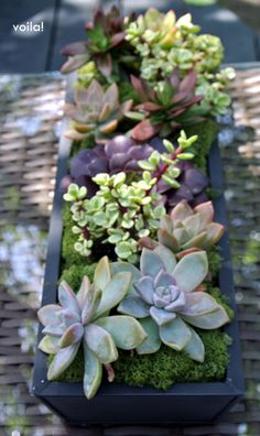 Outdoor dining table inspiration using a metal trough filled with #succulents in differing colors and varietals, using foam underneath along with moss to fill in the gaps... #Centerpieces