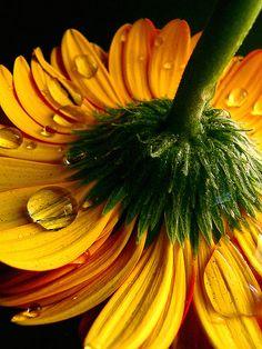 Yellow by paulo medeiros