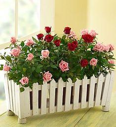 Picket fence planter: