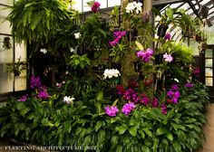 shade orchids in the garden | Longwood Gardens Orchids 64 1024x729 Orchid House at Longwood Gardens ...