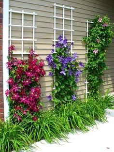Best landscaping ideas for your backyard and front yard, including landscaping design, garden ideas, flowers, and garden design. Backyard Garden Design, Diy Garden, Garden Trellis, Yard Design, Backyard Projects, Garden Projects, Garden Ideas, Backyard Ideas, Clematis Trellis