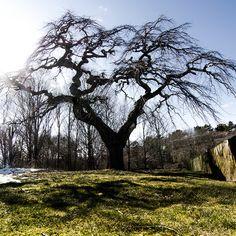 An Interesting Tree