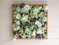 Framed Succulent Display: Step-by Step Instructions