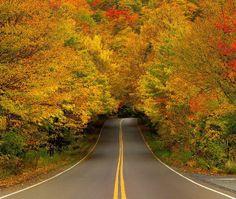 Outono Túnel da árvore - EUA Vermont