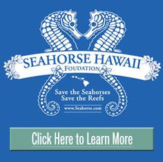 Seahorse Hawaii Foundation - Save the Seahorses. Save the Reefs.
