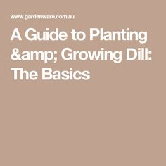 A Guide to Planting & Growing Dill: The Basics