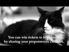 More Scorn For Humans From Le Chat Noir | Life With Cats