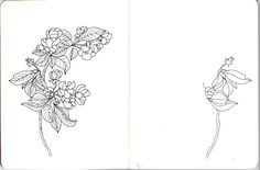 #botanical #botanicalart #flower #flowerart #bloom #blossom #fauna #nature #micron #micronart #sketch #drawing #painting #illustration #ewabau