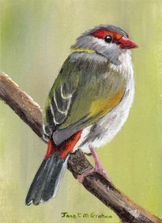 """Red Browed Finch ACEO"" - Original Fine Art for Sale - © Janet Graham"