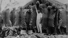 Jaguar skins