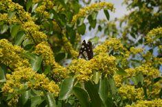Butterfly in Maremma