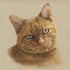 Commissioned pastel portrait of lovely cat Tiff, sadly missed and now reunited with her best friend Pip on the living room wall - immortalised forever