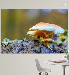 Heilooer bos, landgoed Nijenburg; Prachtige herfstkleuren in het bos, met Macrofoto van een groepje gewone zwavelkoppen op een boomstam. Canvas, Prints, Poster, Animals, Tela, Animales, Animaux, Canvases, Animal