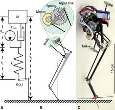 Leaping Robot Inspired by Bush Babies and Parkour Mechanical Design, Mechanical Engineering, Arduino, Iron Man Hand, Robot Leg, Earth Gravity, Mobile Robot, Robotics Projects, Industrial Design Sketch