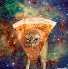 Community Post: 34 Cats Who Know It's Better In Space