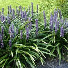 Back Gardens, Outdoor Gardens, Liriope Muscari, Brick Path, Shade Garden, Garden Styles, Garden Projects, Garden Inspiration, Planting Flowers