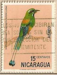 El momoto cejiazul, ave de singular belleza y policromo plumaje es ave nacional de los países de El Salvador y Nicaragua; en El Salvador es conocido como torogoz y en Nicaragua como guardabarranco