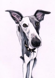 Dobby Whippet, custom pet art by Jim Griffiths https://www.etsy.com/listing/216347712/custom-pet-portrait-by-jim-griffiths Whippet drawing