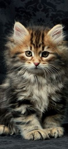 Christmas Scenes, Beautiful Cats, Cute Cats, Animals, Cutest Animals, Seasons Of The Year, Cats, Pretty Cats, Pretty Cats