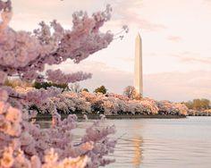 Cherry Blossom Festival Week | Global Lipstick