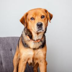 Binder is available for adoption through Best Friends Animal Society.  * Friendly and playful* Great exercise buddy* Loves other dogs