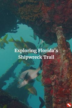 From trails in the jungle to trails underwater, Florida has a lot to offer!