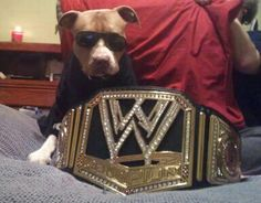 Trumper1328: #WWEDOGS The Rock #dogs