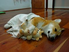 Corgi puppy with blanket and baby