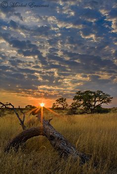 Sunset on the Kalahari, South Africa. Real safari land in South Africa. Places Around The World, Oh The Places You'll Go, Places To Travel, Places To Visit, Around The Worlds, Beautiful World, Beautiful Places, Safari Photo, Okavango Delta