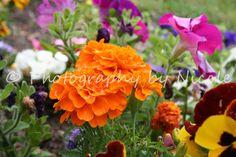 Garden Beauty 1