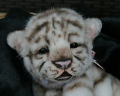 Isis White Tiger Cub by misty Pretty Cats, Beautiful Cats, Animals Beautiful, Big Cats, Cats And Kittens, Cute Cats, Mundo Animal, My Animal, Cute Baby Animals