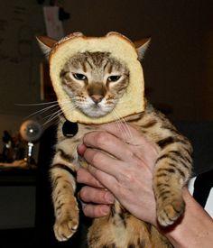 """Y, con la cabeza en el pan de molde, pensó: """"Tanta tecnología para desarrollar la red... ¿era para esto?"""""""