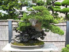 http://bonsaijapan.files.wordpress.com/2007/07/11-076.jpg