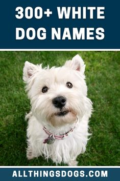 Dogs come in all shapes and sizes, but a snowy white, fluffy coat always has a special place in our hearts. Choose from our list of white dog names for your new walking cloud. #whitedognames #dognames #whitepetnames Urine Odor, Dog Urine, Pet Odors, White Fluffy Dog, Fluffy Coat, White Puppies, White Dogs, Dog Pee, Pet Names