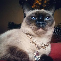 Crown Princess Allonwyn poses wearing the Great Catard Diamond. One of the largest diamonds in the world the Great Catard is literally one of legend. The ancient tale of the once great Prince has...