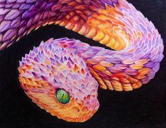 Bush viper Colouring Pages