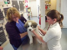 Lauren is the Vet Assistant you see here with Dr. Poole. Levi is her puppy getting a check-up and some vaccines.