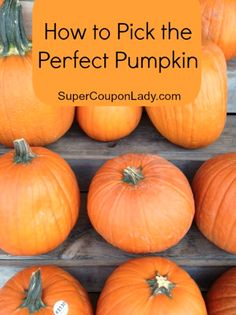 How to Pick the Perfect Pumpkin!! http://www.supercouponlady.com/2013/10/how-to-pick-the-perfect-pumpkin.html/