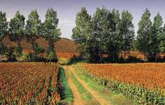 """The Gers is the central department of Gascony in the Midi-Pyrenees, located just north of the central Pyrenees and since Napoleon times has been named after the Gers river which runs north-south through the department. It is largely agricultural and is the least densely populated department in France.   Gers FieldThe Gers is sometimes referred to as the French Tuscany because of its gently rolling hills and old villages, including many """"bastides"""" or fortified towns."""