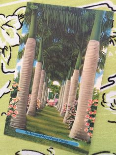 royal palm vintage 1000 images about palm trees on date palms 2022