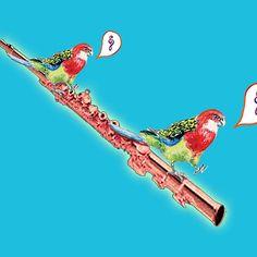 Two Parrots Flute Music