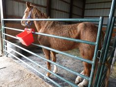 April This is Fantastic. She was left on the streets starving. Horse Rescue, Illinois, Horses, Animals, Animaux, Animales, Horse, Animal, Dieren