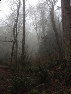 Hiking cougar mountain 7:30am