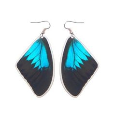 Real Butterfly Wing Earrings - Papilio Ulysses