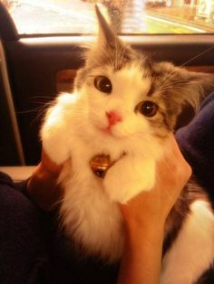 Things that make you go AWW! Like puppies, bunnies, babies, and so on. A place for really cute pictures and videos! Fluffy Kittens, Cute Cats And Kittens, I Love Cats, Kittens Cutest, Funny Cats, Funny Animals, Cute Animals, Animal Memes, Wild Animals