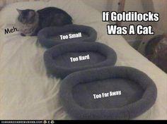 If Goldilocks Was A Cat